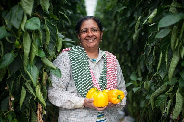How Fair Trade Went From a Crazy Coffee Concept to a Global Agriculture Trend - Fair Trade USA Bell Pepper