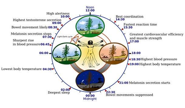 The Beginner's Guide to Getting Better Sleep circadian rhythm