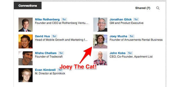 The Ultimate Guide to Outreach on Social Media: 4 Ways to Get Responses From the Popular and Famous- joey the cat!