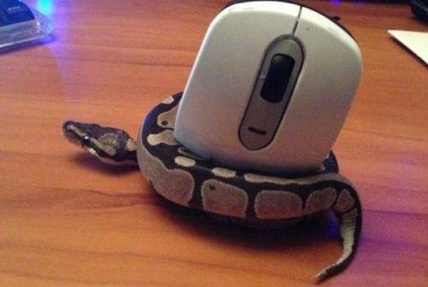 snake-holding-a-mouse-controller