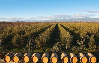 Chacewater Makes Nevada County a Land of Wine and Olive Oil