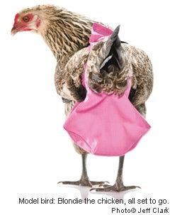 ChickenDiapers.com