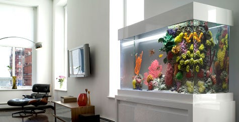 Finding A Niche In Aquariums For The Rich