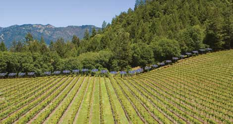 The Greening of Napa Valley