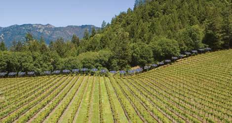 The Greening of Napa Valley