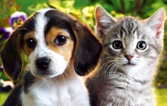 Cuddly Kittens? Here's How to Make Popular Web Videos Anyway