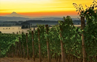 Wine Success Stories Out of Oregon