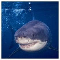 shark-waters.jpg