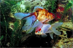 Tropical Fish and Aquarium Rentals