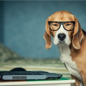 Who Let the Dogs Out? Hooray! Friday Is 'National Bring Your Dog to Work Day.'