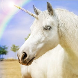 Startups Don't Need Unicorn Aspirations to Attract Investor Attention