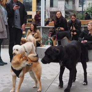 Amazon Opens Up Dog Park for Its 2,000 Office Pups