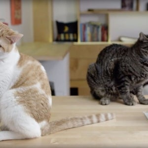 How This Cool Kitty Cafe Helps Humans Find Purr-fect Pets