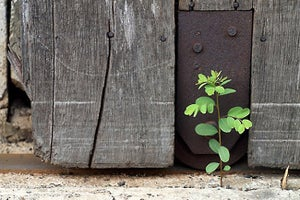 How to Spot Opportunities for Growth at Your Startup