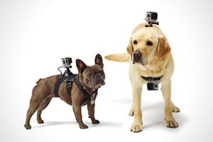 GoPro Finally Launches a Camera Harness for Man's Best Friend