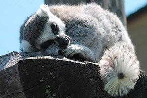 3 Simple Ways to Improve Your Sleep