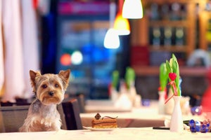 Because Running a Business Is 'Ruff': 5 Lessons From Entrepreneurs in the Pet Industry