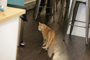 For This Cat Cafe, Crowdfunding With Kickstarter 'Was Never About the Money'