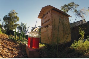 Flow Hive, a Gadget for Beekeepers, Sets New Crowdfunding Record on Indiegogo