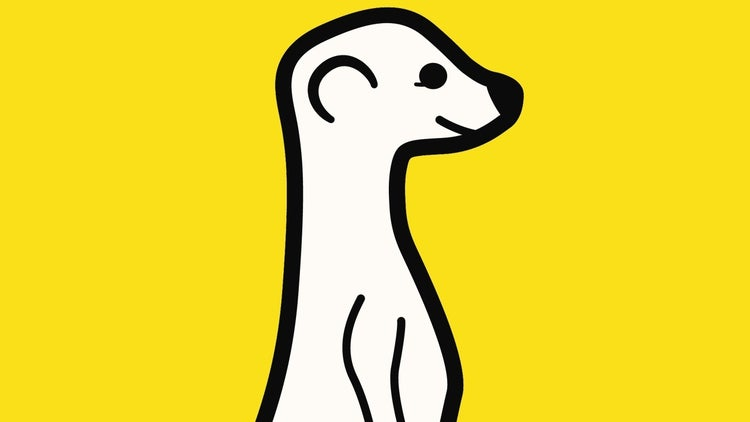 Meerkat Was Just a Side Project. Here's How it Became a Viral Sensation.