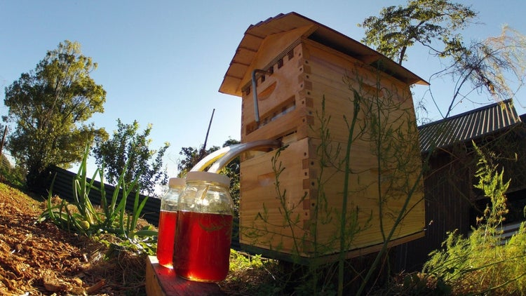 Beekeeper Invention Sets Record for Most Money Raised on Indiegogo