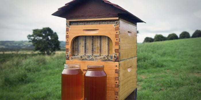 A Father-Son Team Raises $10 Million for Their Beekeeping Invention on Indiegogo