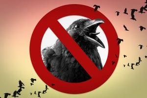 5 Ways We Can All Silence Our Inner Crow