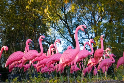 Creator of the Iconic Pink Plastic Flamingo Dies