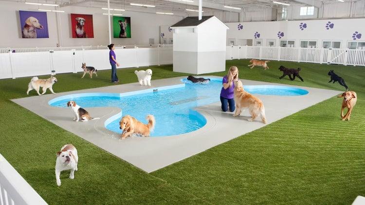 NYC's JFK Airport Is Building a New Luxury Terminal Exclusively for Animals