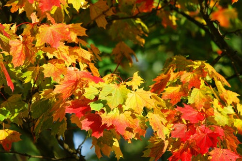 Want a Piece of the Fall Foliage Action? This Company Will Send You 3 Leaves for $19.99.