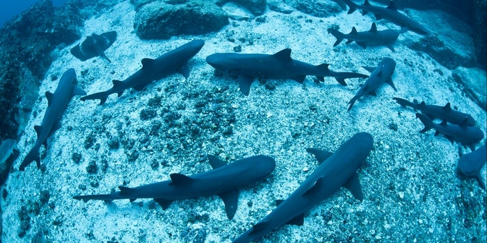 5 Reasons Your Startup Should Add a 'Shark' to the Dream Team