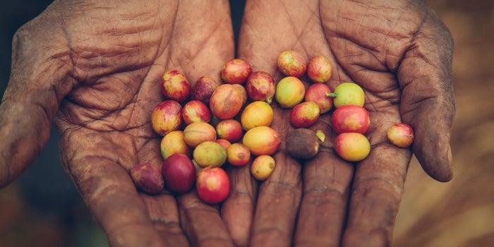 5 Universal Truths About Entrepreneurship Learned From Rwandan Coffee Farmers