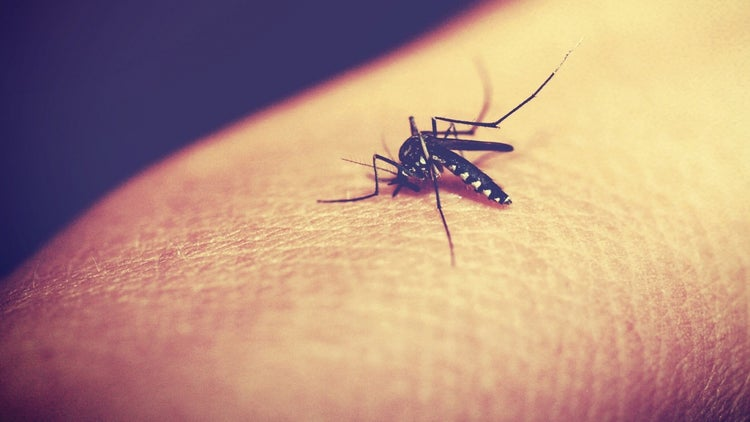 Is the Zika Virus Heading to Your Town? Google Will Find Out.