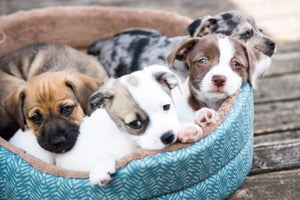 6 Reasons You Can't Go Wrong With the Pet Industry