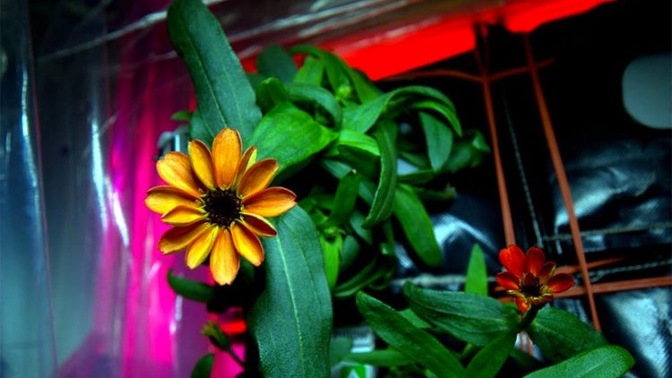 Boldly Growing Where No Flower Has Grown Before