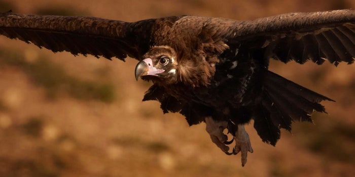 How Culture Vultures Can Kill Your Company's Success