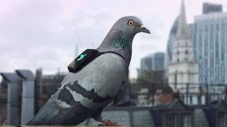 Bird's Eye View: Plume Labs Enlists Feathered Help
