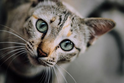 Rough News For Cat Lovers: Your Cuddly Kitty Could Make You Prone to F...