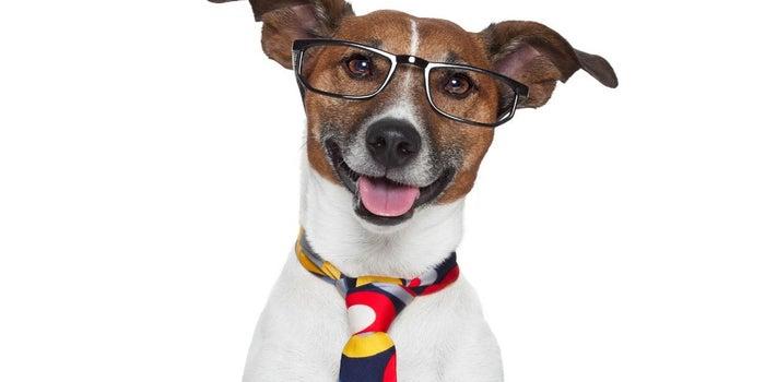 Mascotas en la oficina: 5 beneficios de llevarlas