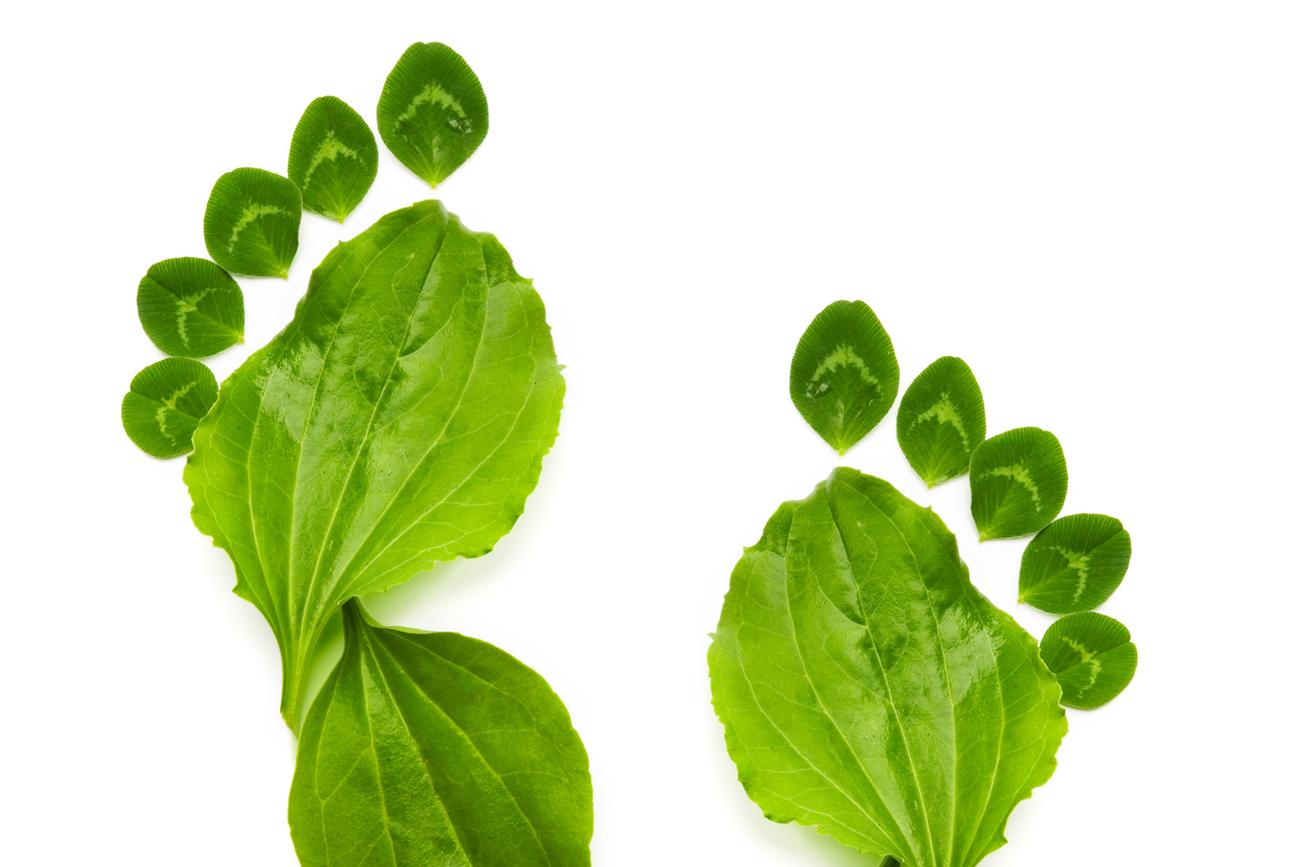 7 Pasos Para Hacer Tu Negocio Ms Verde