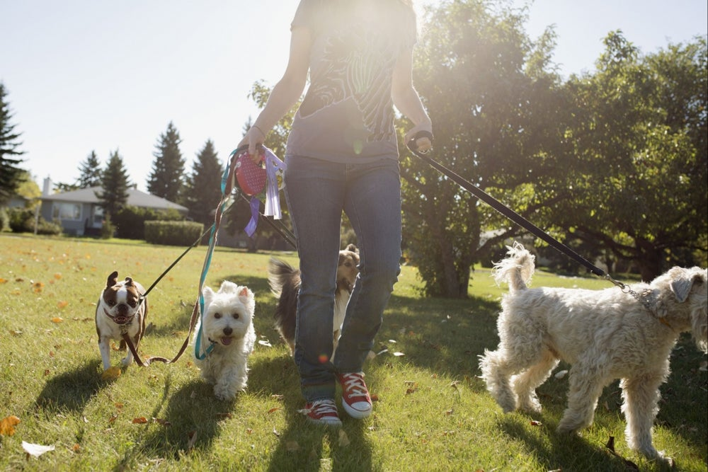Dogs, Birds and More: Check Out These 7 Pet Franchises