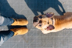 What Your Furry Companion Can Teach You About Your Job Search (Infographic)