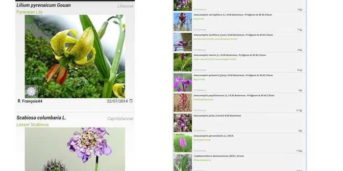 Identify Your herbs, Fruits & Wildlife on the Go with this App