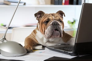 It's 'Take Your Dog to Work Day': Have You Thanked Fido Today?