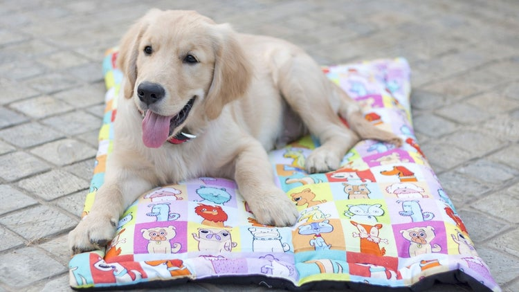 Easy-to-use Merchandise for Pets