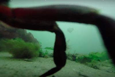 This Fisherman Caught a Lost GoPro and Posted Amazing Footage