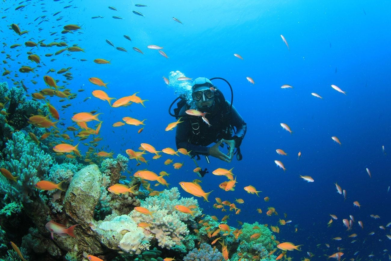 Caribbean Diving: 5 Ways Social Media Has Transformed Tourism Marketing