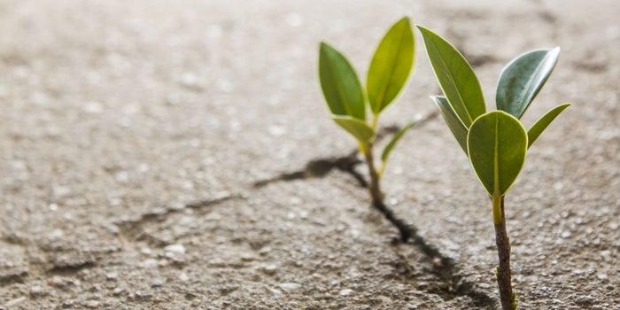 Las 5 mejores startups sociales y ambientales