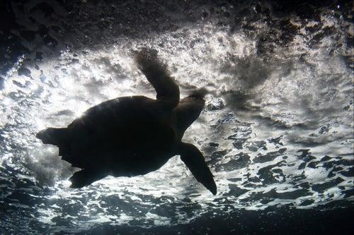 These 'Biohybrid' Robots Crawl Like Sea Turtles