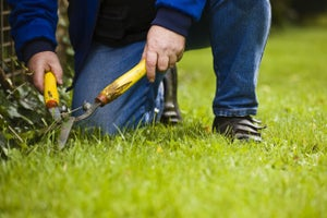 10 Success Tips for Your Landscaping Business